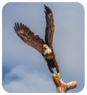 eagle_round